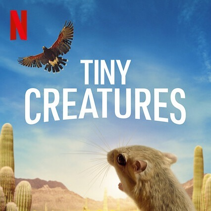 Discover the hidden world of #TinyCreatures now on @Netflix! Let us know how it sounds!